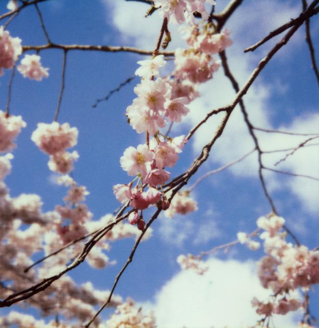 Bloss1