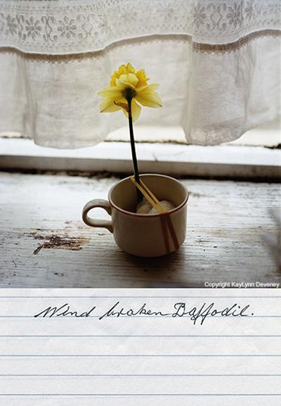 Brokendaffodil