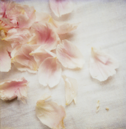 Peony_petals