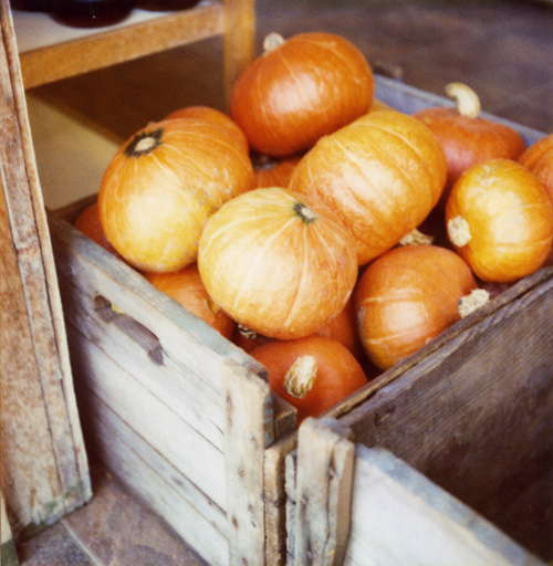 Pumpkin_box500