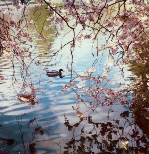 Polaroid_pond