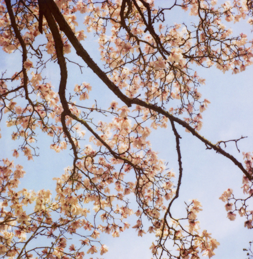 April10_mag1