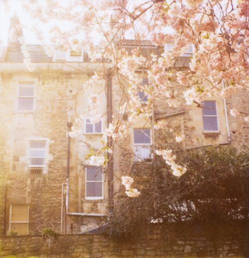 Blossom_rear