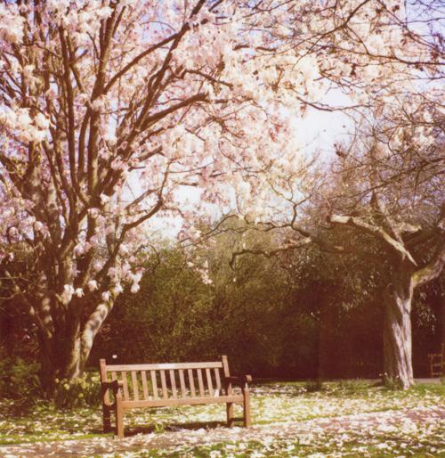 April10_mag_tree